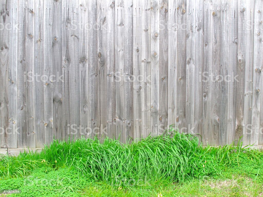 Wood fence have green grasses at bottom stock photo