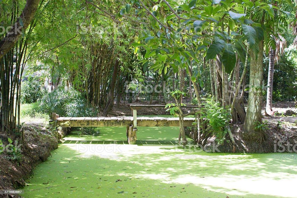 Дерево тропа в небольшой лесной водой, водорослями Пруд Стоковые фото Стоковая фотография