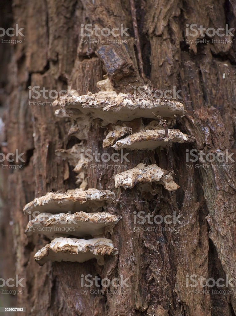 Wood Fungus stock photo