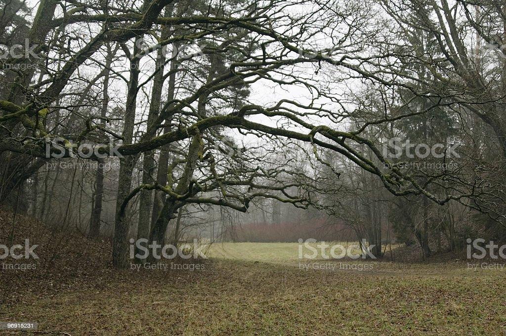 Wood glade stock photo