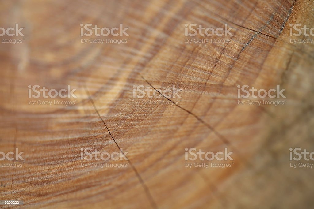 Wood grain, macro shot stock photo