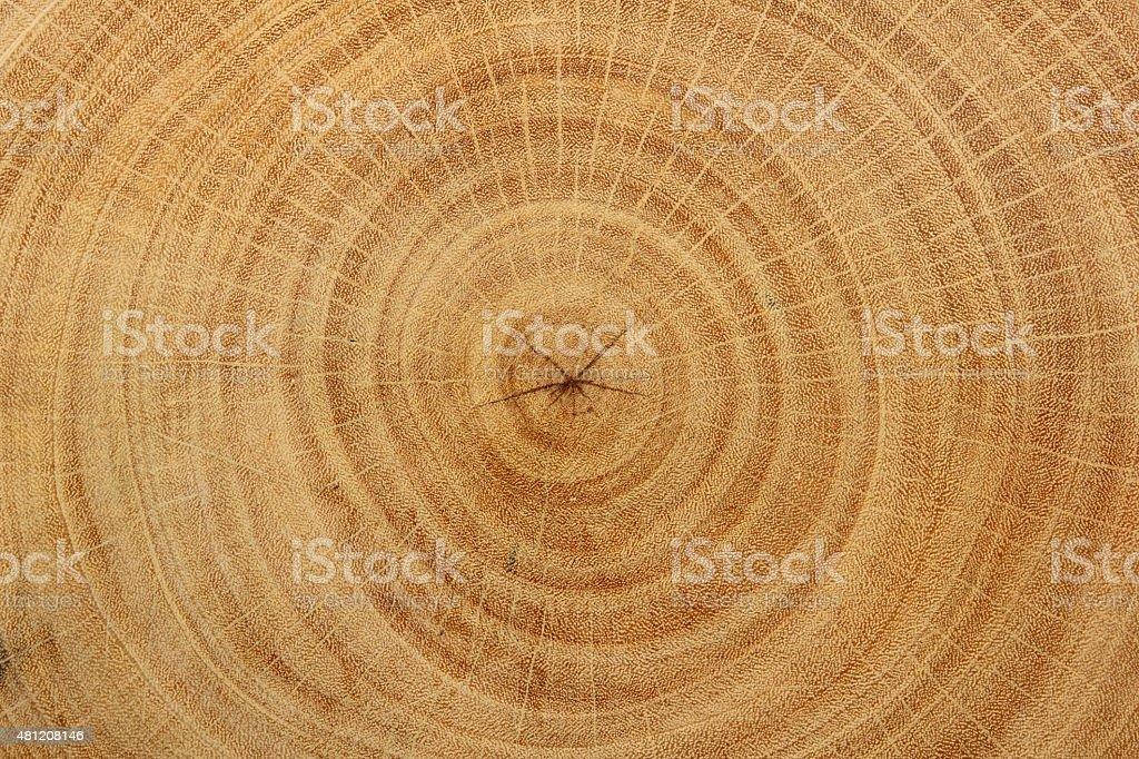 Wood Grain of tamarind tree stock photo