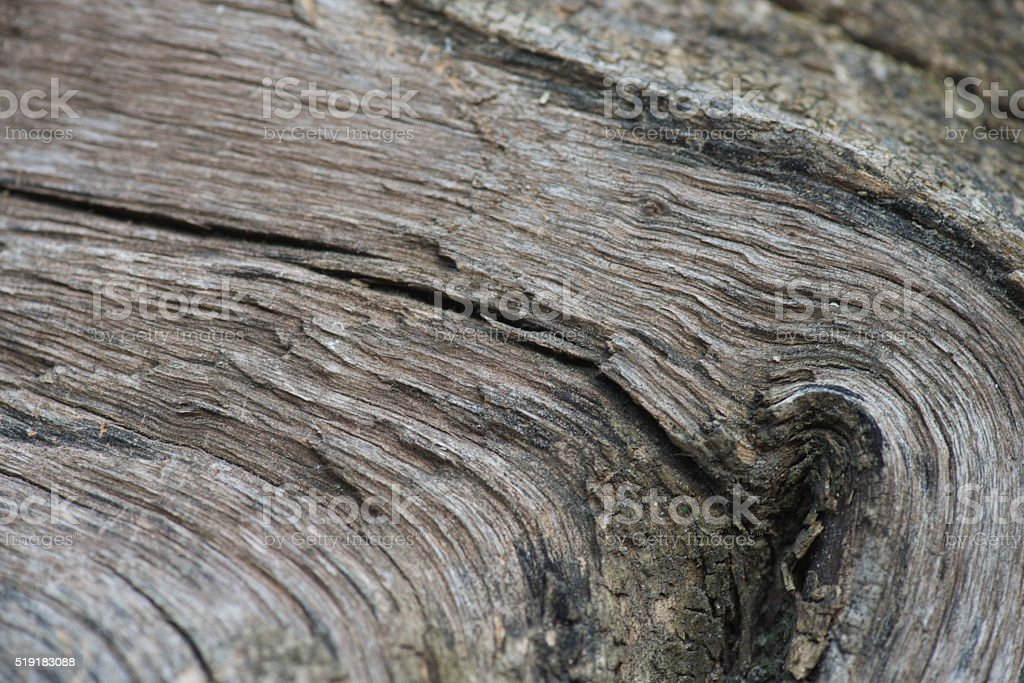 Wood grain texture stock photo