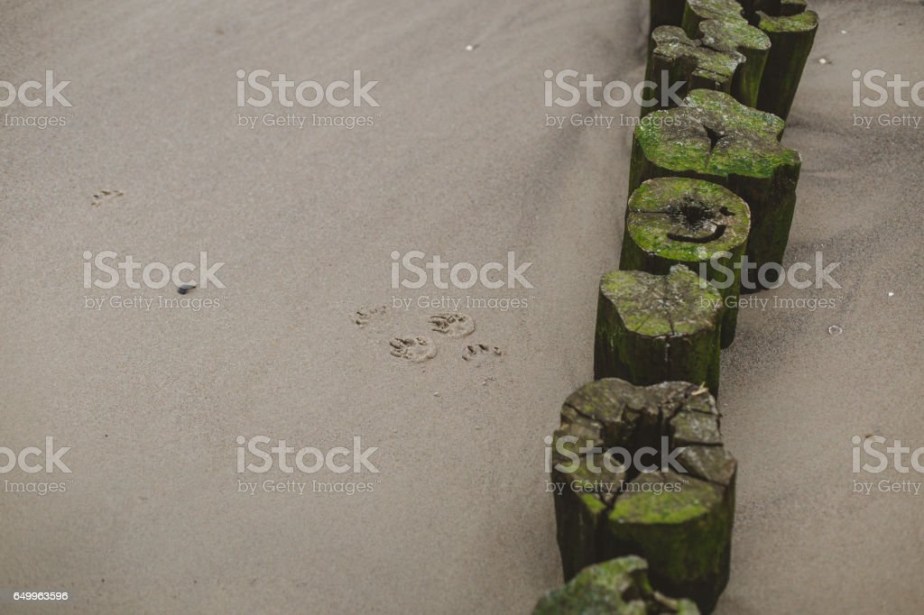 wood groyne in sand stock photo