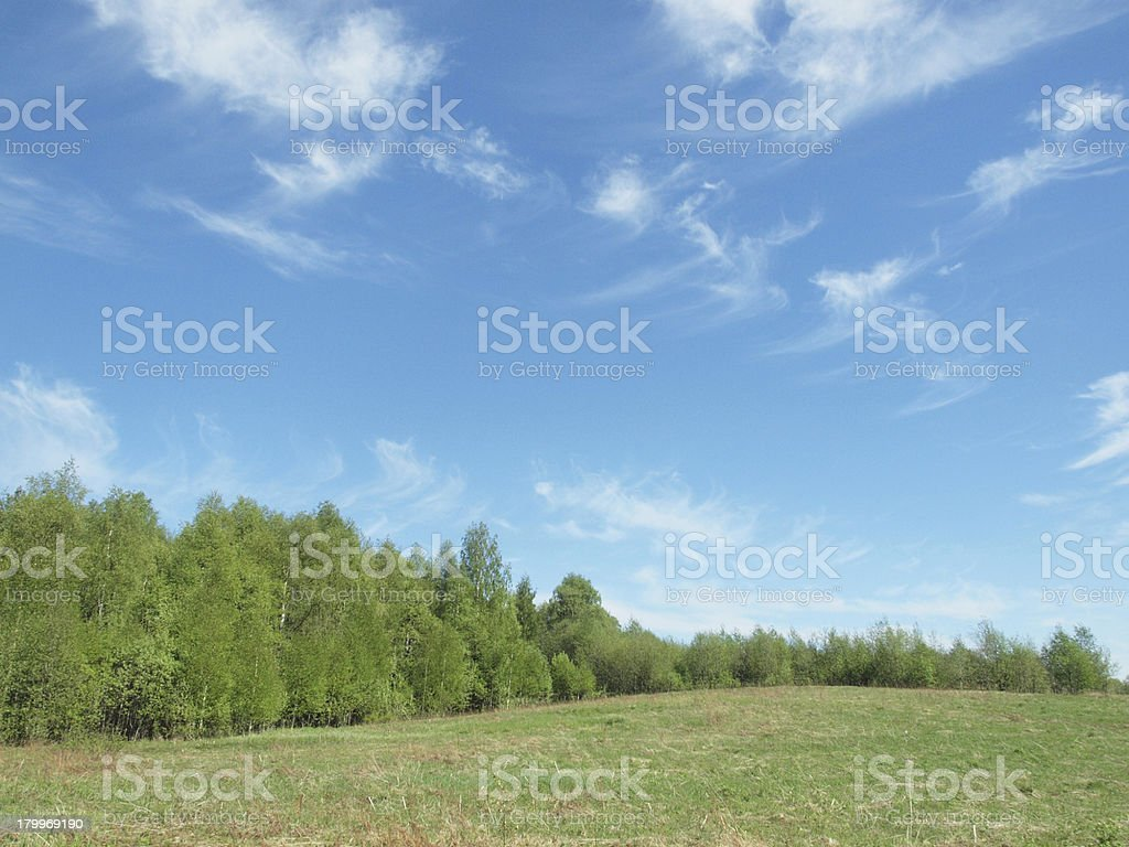 Wood in the spring stock photo