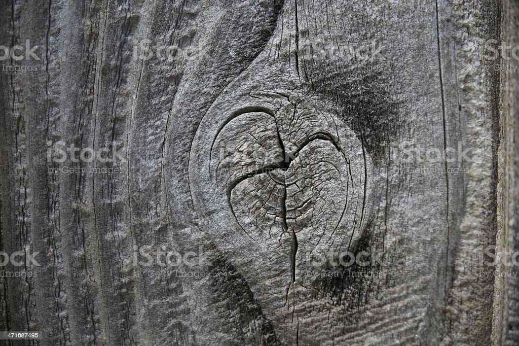 Nudo de madera foto de stock libre de derechos