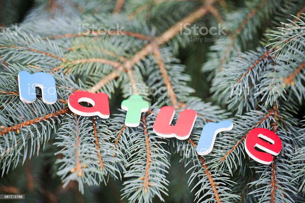 Wood Letters Spelling NATURE on a Blue Spruce Tree stock photo