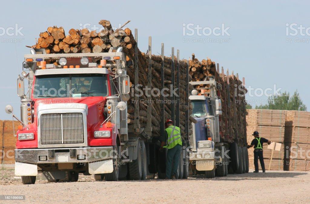 Wood Log Transport Trucks stock photo