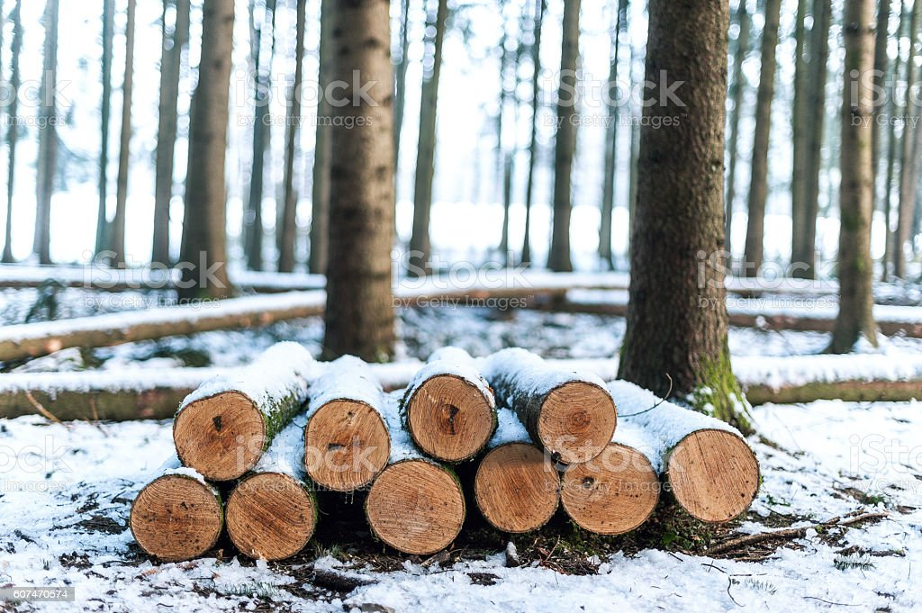 Wood logs covered in snow stock photo