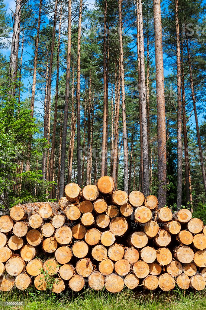 Wood, logs for fireplaces. stock photo