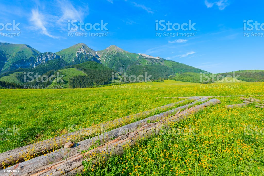 Wood logs on green meadow with blooming flowers in summer landscape of Tatra Mountains, Slovakia stock photo