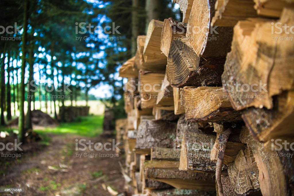 Wood Logs Piled Up In a Forest stock photo