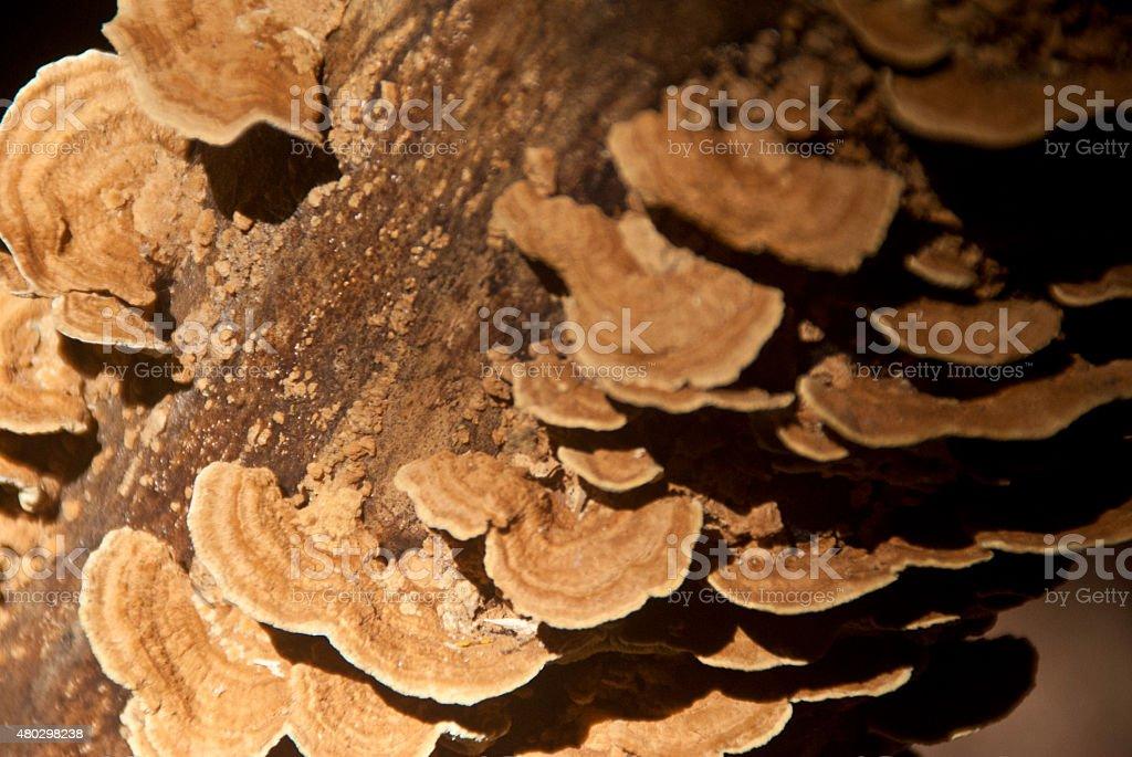 Wood mushroom stock photo