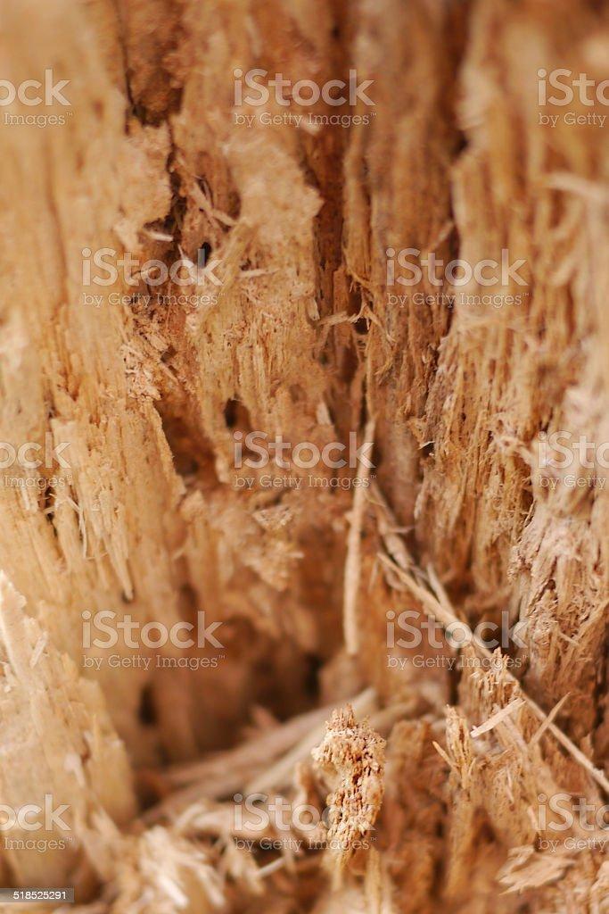 Wood of a broken tree royalty-free stock photo