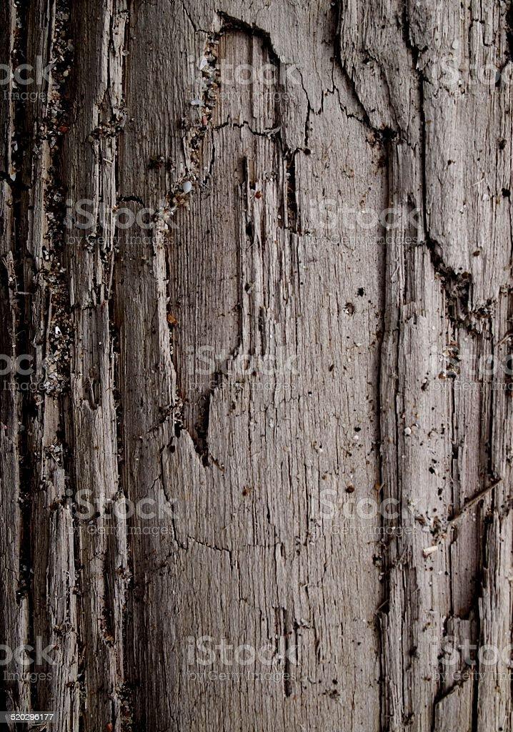 Wood on the beach in Puerto Cayo, Ecuador stock photo