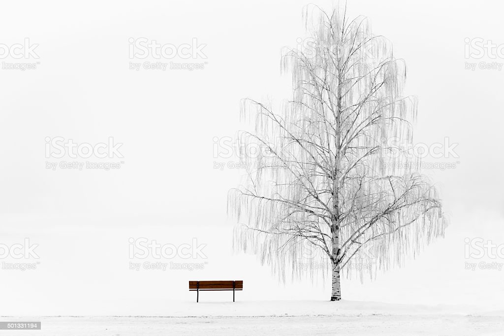 wood park bench sitting beside weeping willow tree in winter stock photo