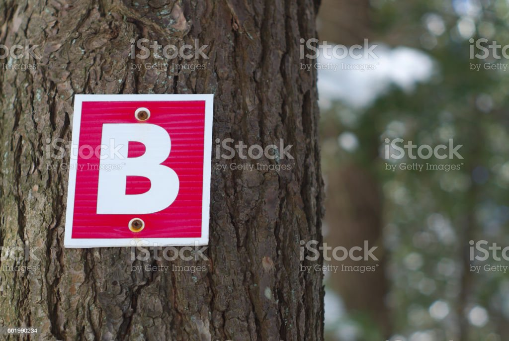 wood path sign letter b forest graphic typography stock photo