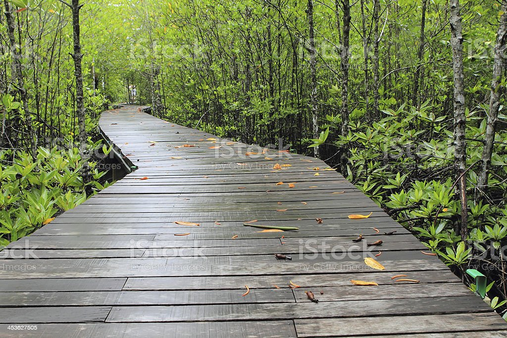 Wood path way among the Mangrove forest, Thailand royalty-free stock photo