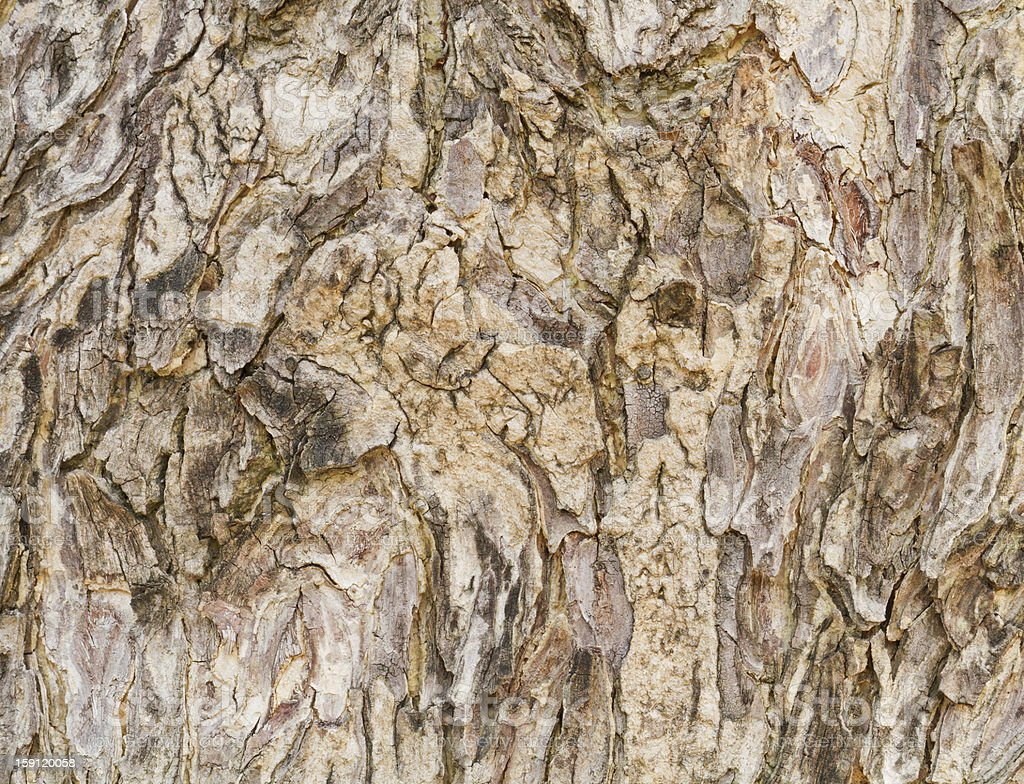 Wood pattern abstract. royalty-free stock photo