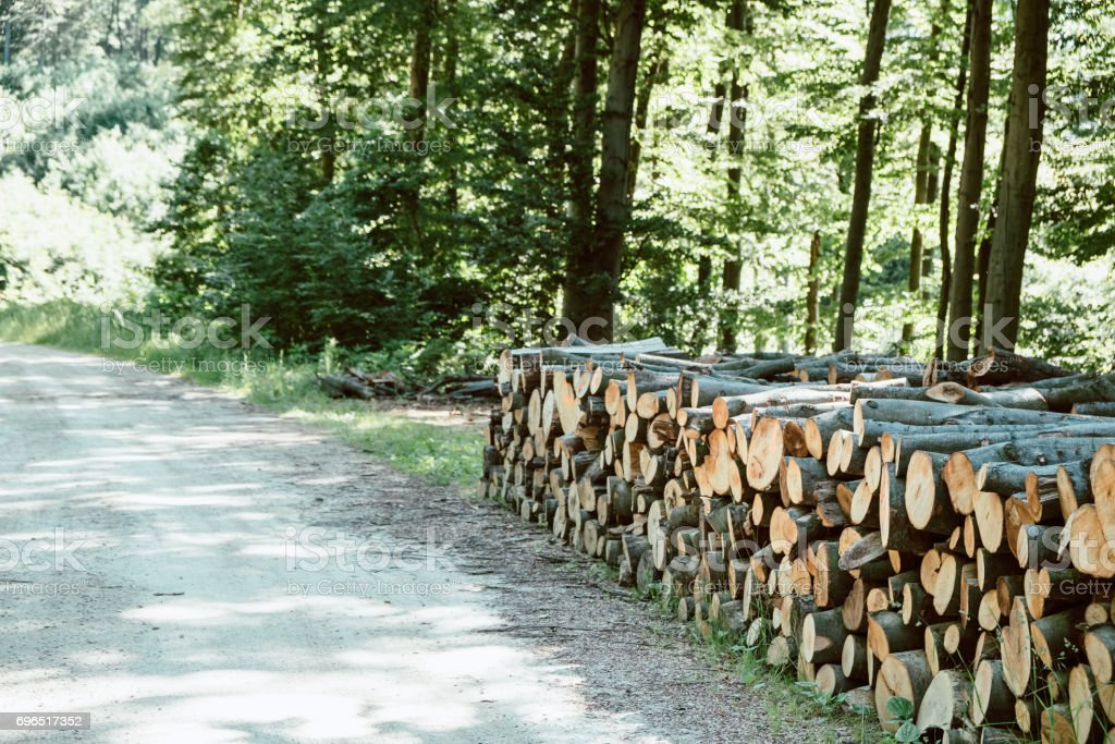 Wood pile along the forest road stock photo