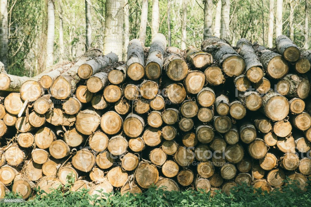 Wood pile in the forest stock photo