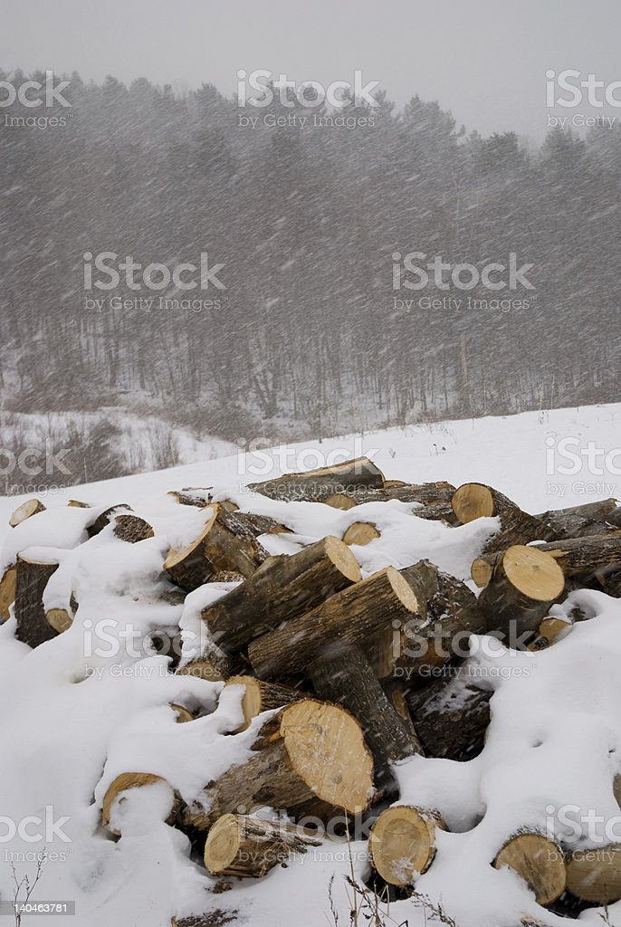 Wood Pile stock photo