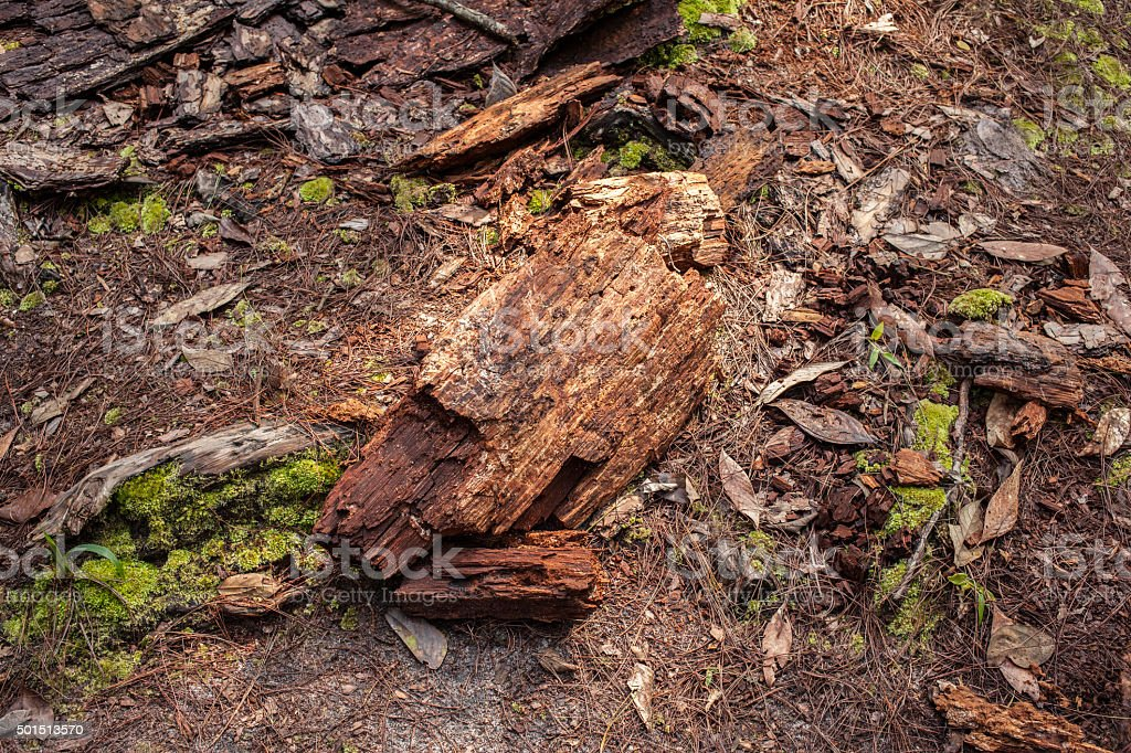 Wood remains on the ground stock photo