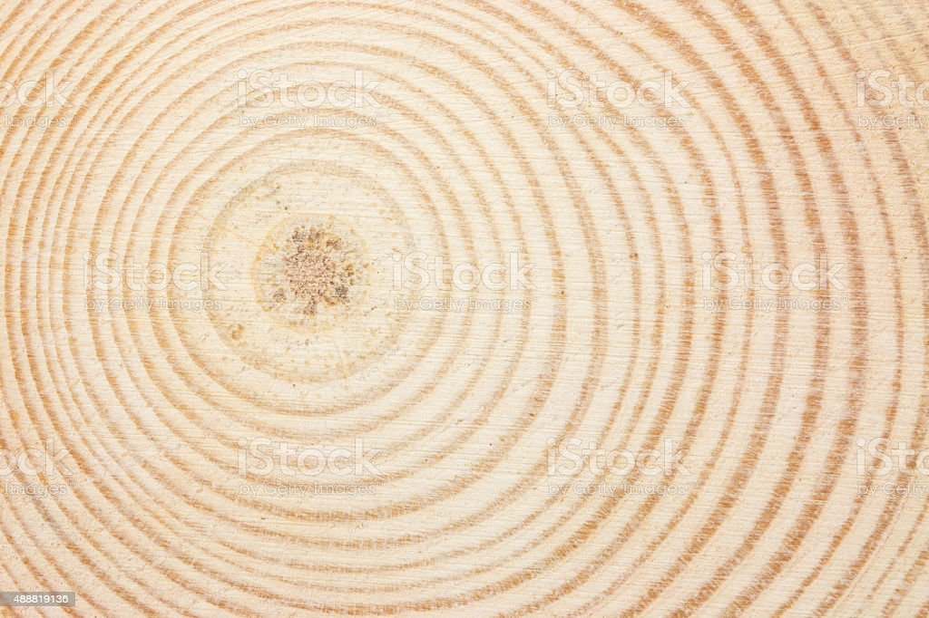 Wood ring texture stock photo
