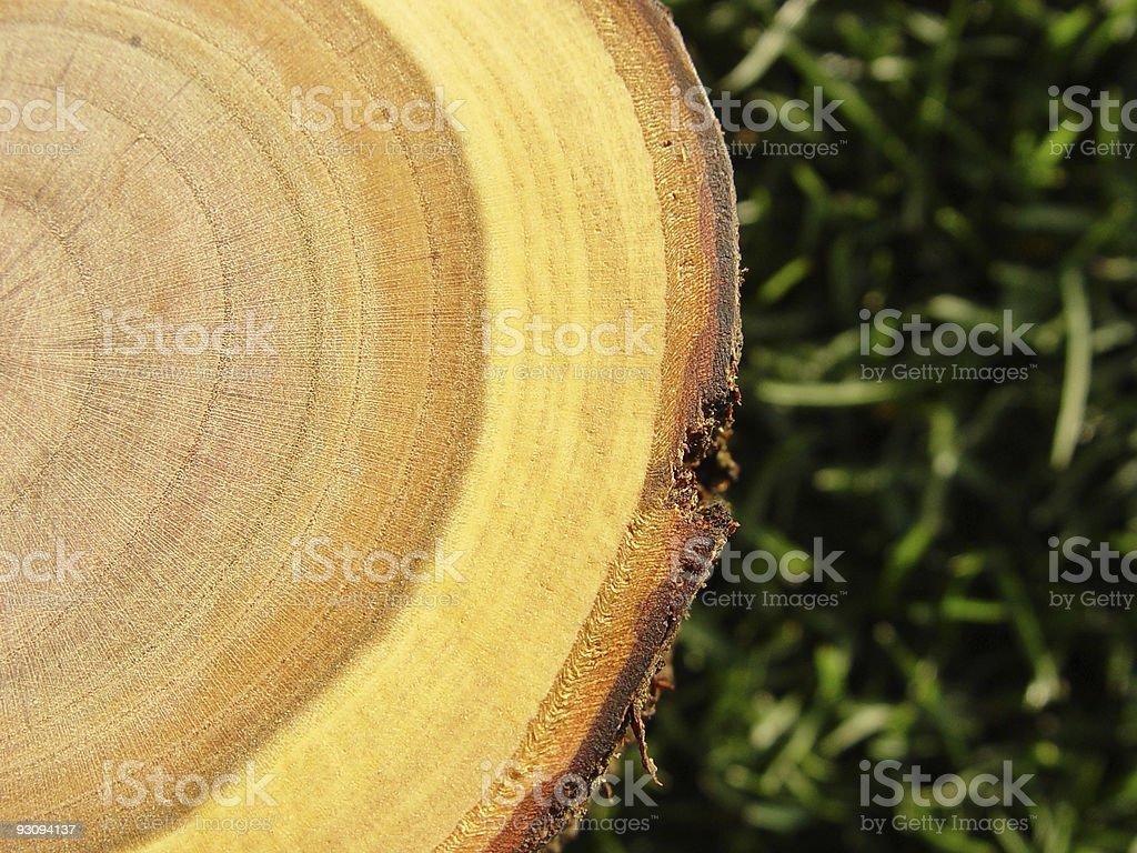 Wood Rings Close-up royalty-free stock photo