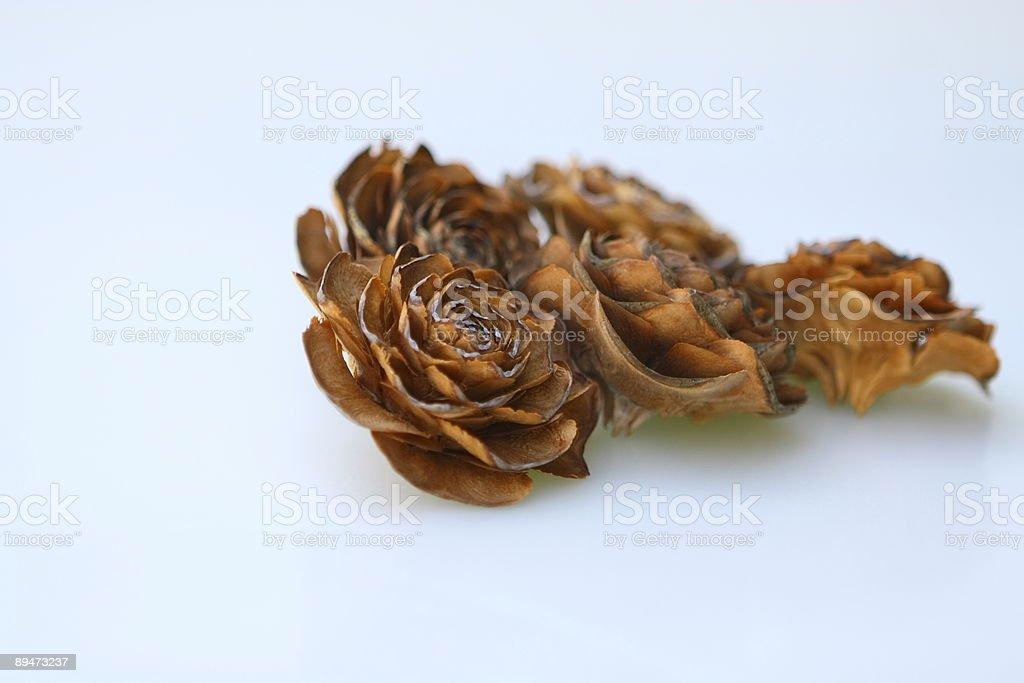 Wood Rose on White stock photo