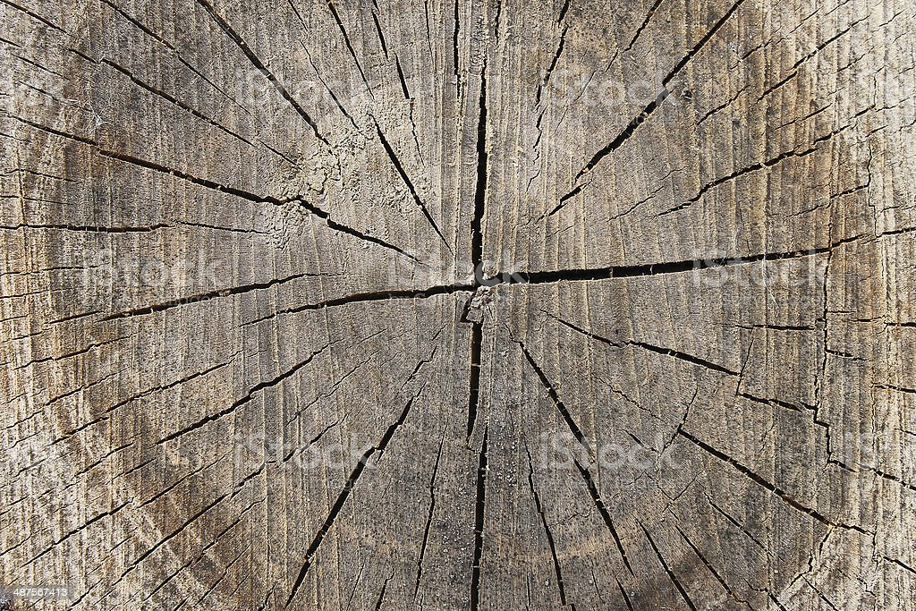 Wood sectional royalty-free stock photo
