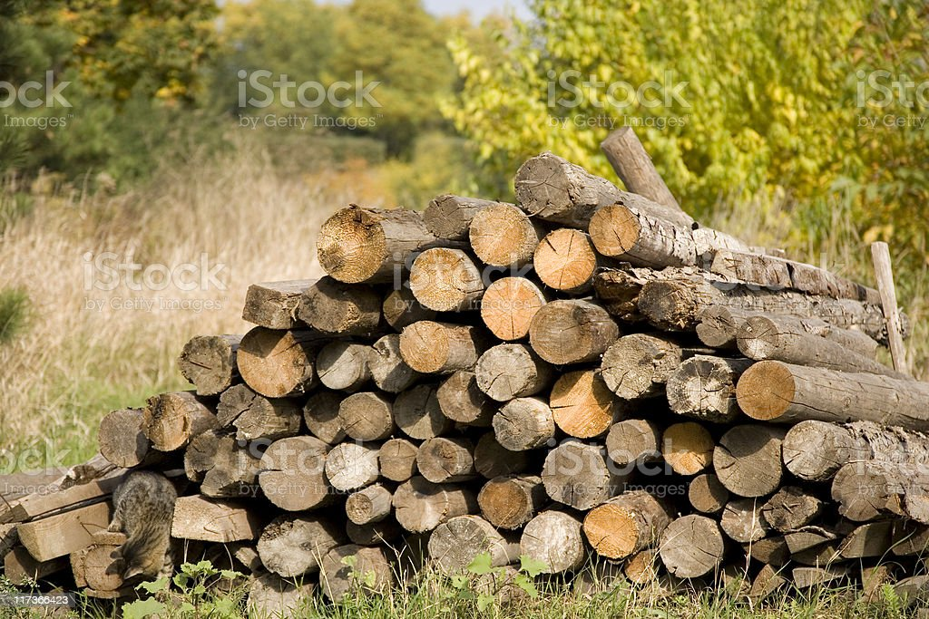 Wood stacked royalty-free stock photo
