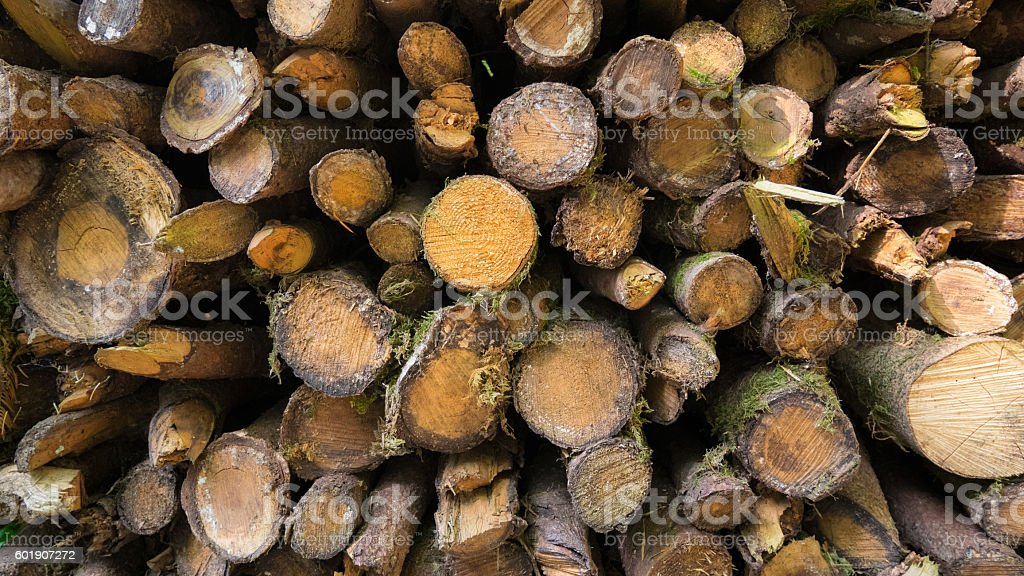 Wood stock in forest stock photo