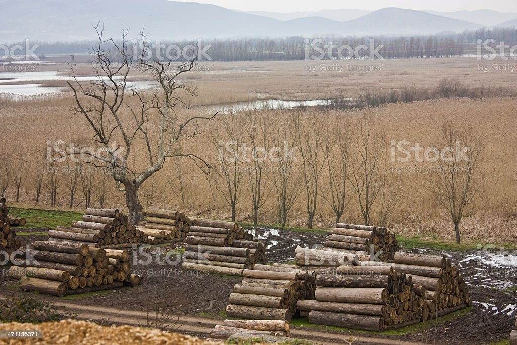 Wood stock in the nature royalty-free stock photo