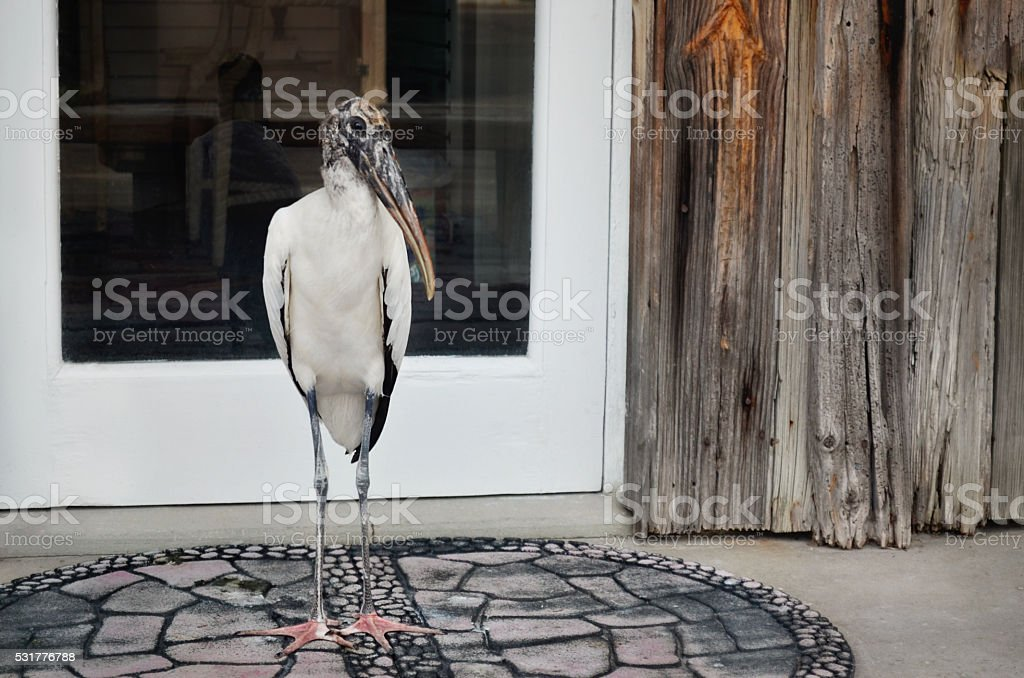 Wood stork standing very still stock photo