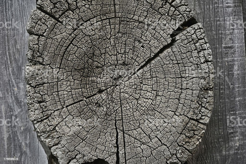 Wood structure royalty-free stock photo