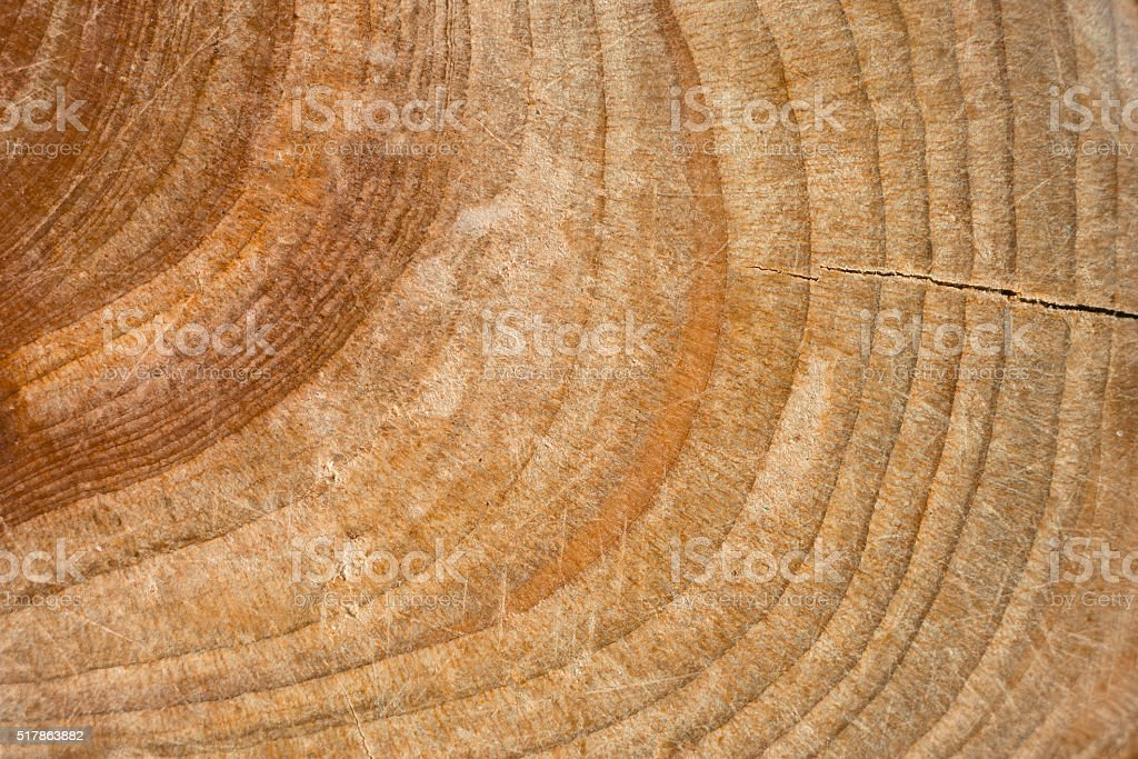 Wood stump texture, cutted tree trunk stock photo