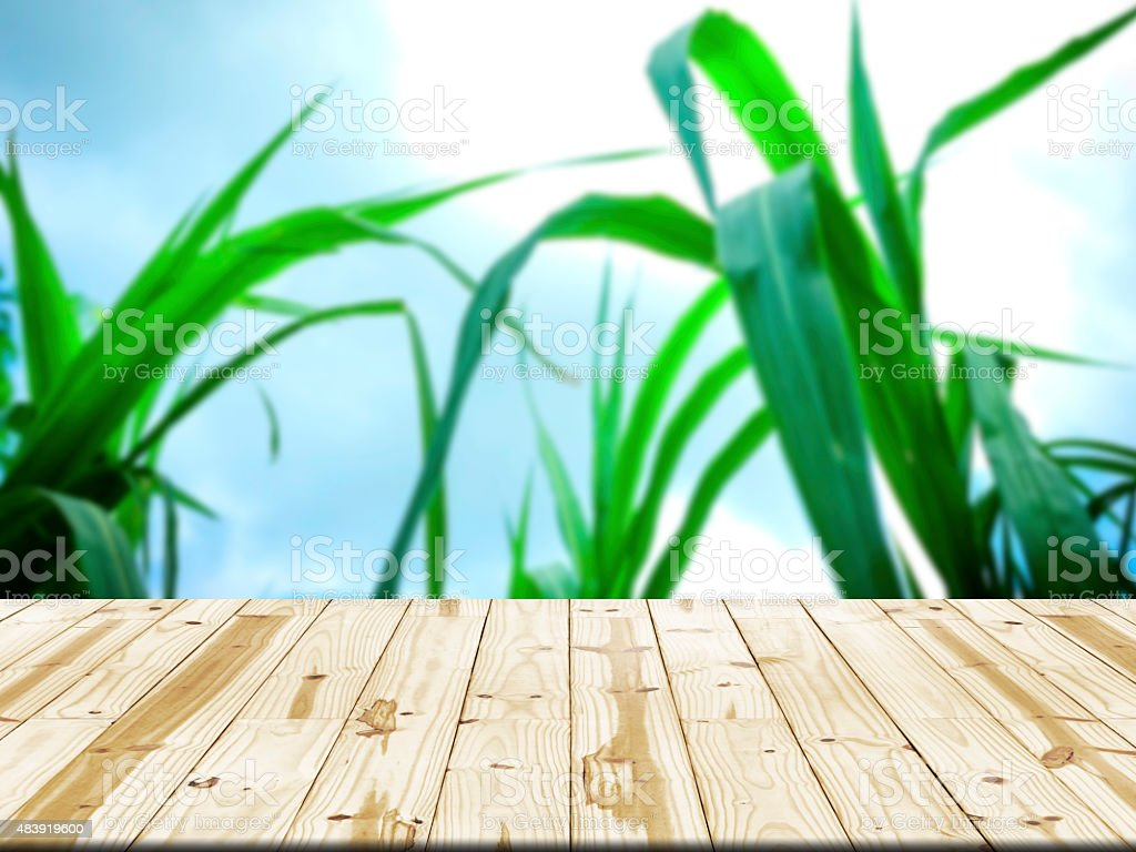 Wood table top on corn leaves blurred background royalty-free stock photo