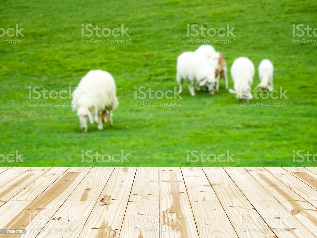 Wood table top on the flock of sheeps blurry backgrounds. royalty-free stock photo