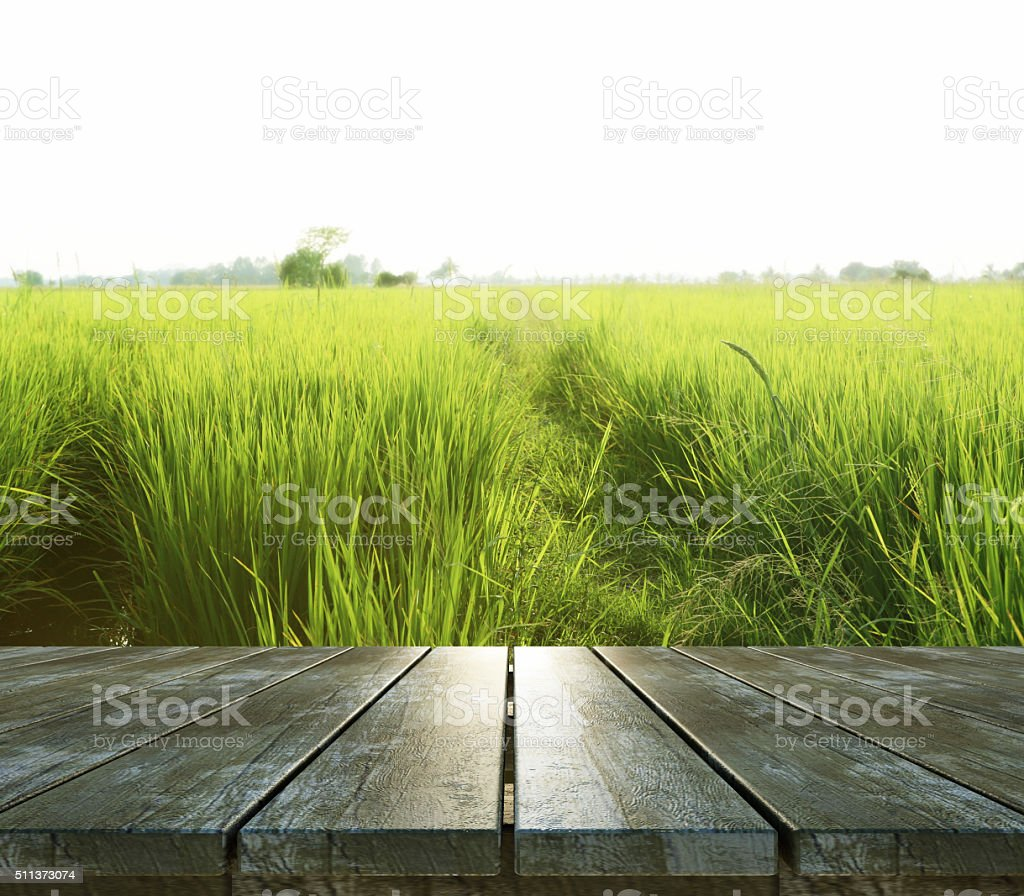 Wood Texture and Green rice field stock photo