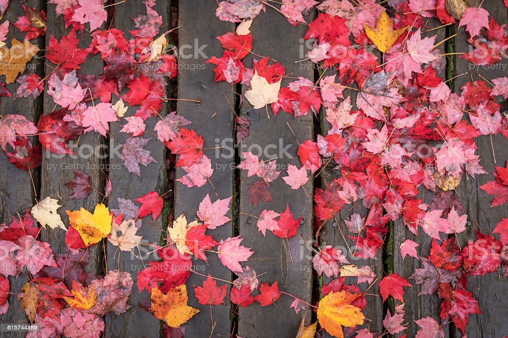 Wood Texture Background and Autumn Maple Leaves stock photo