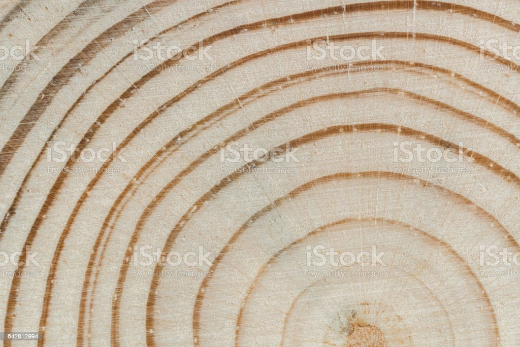 Wood texture. Cross saw cut pine with annual rings and core close-up. stock photo