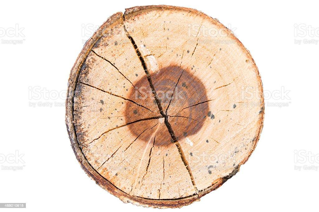 Wood Texture of Cut Tree stock photo