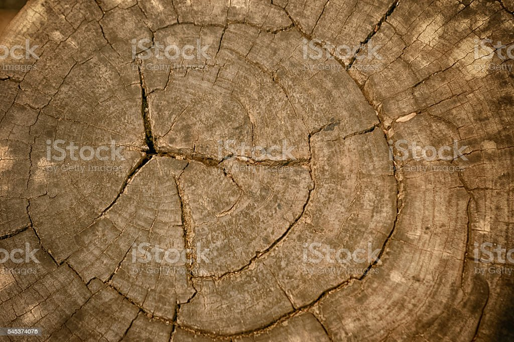 Wood texture of cut tree trunk, Tree-rings stock photo