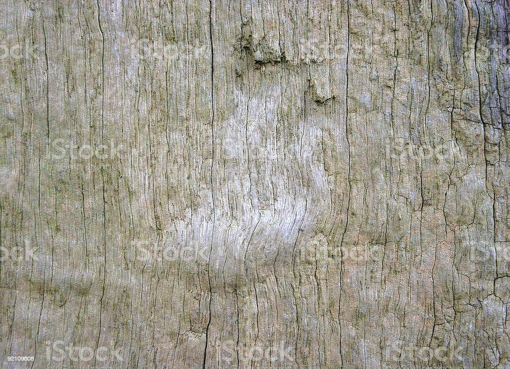 wood texture: soft bare oak stock photo