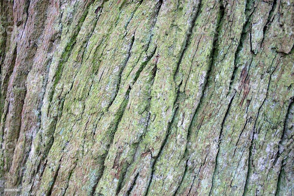wood texture: wavy oak bark stock photo