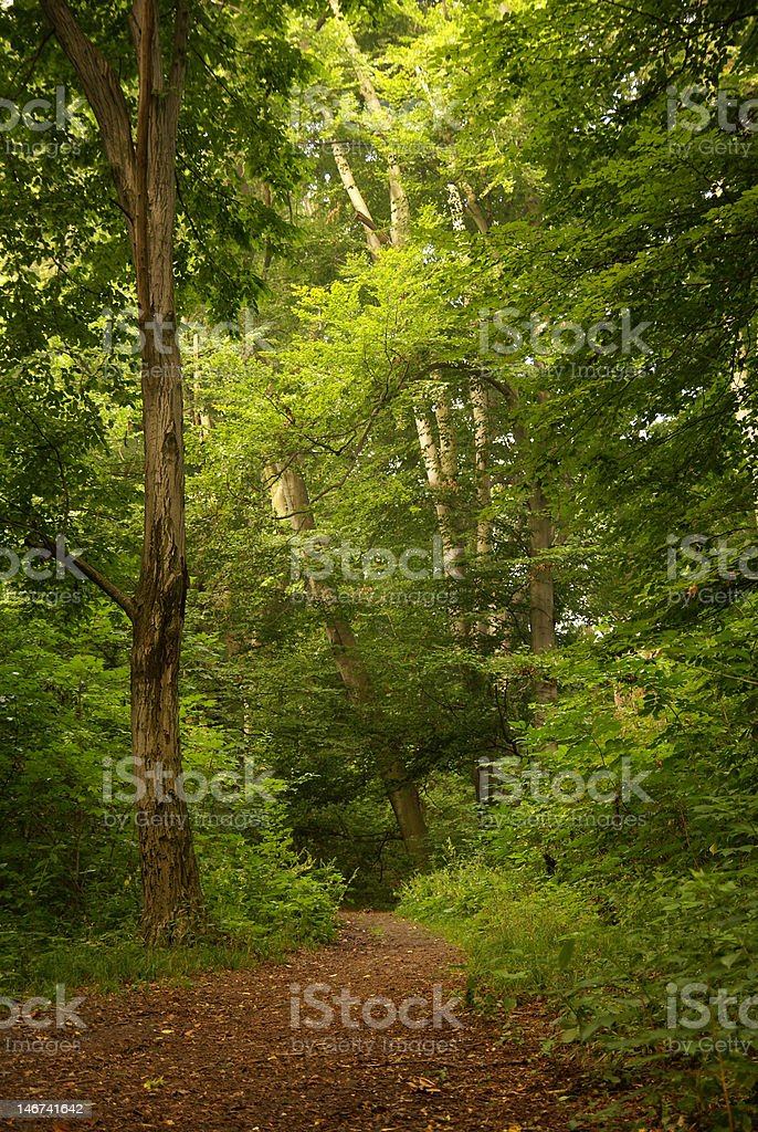 Wood track royalty-free stock photo
