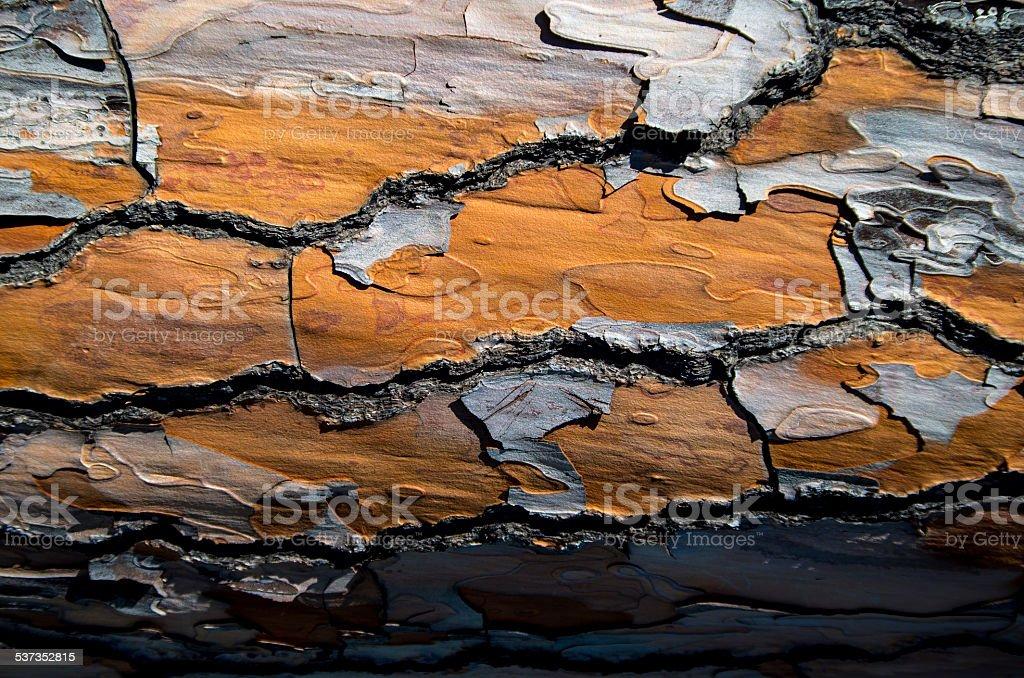 Wood Tree stock photo