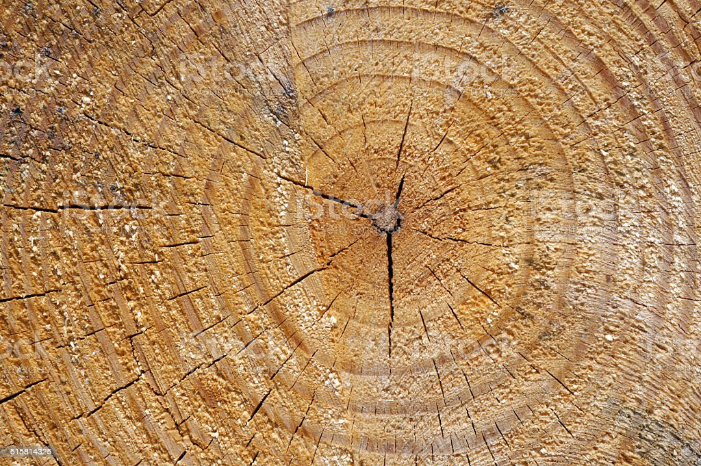 Wood tree rings background stock photo