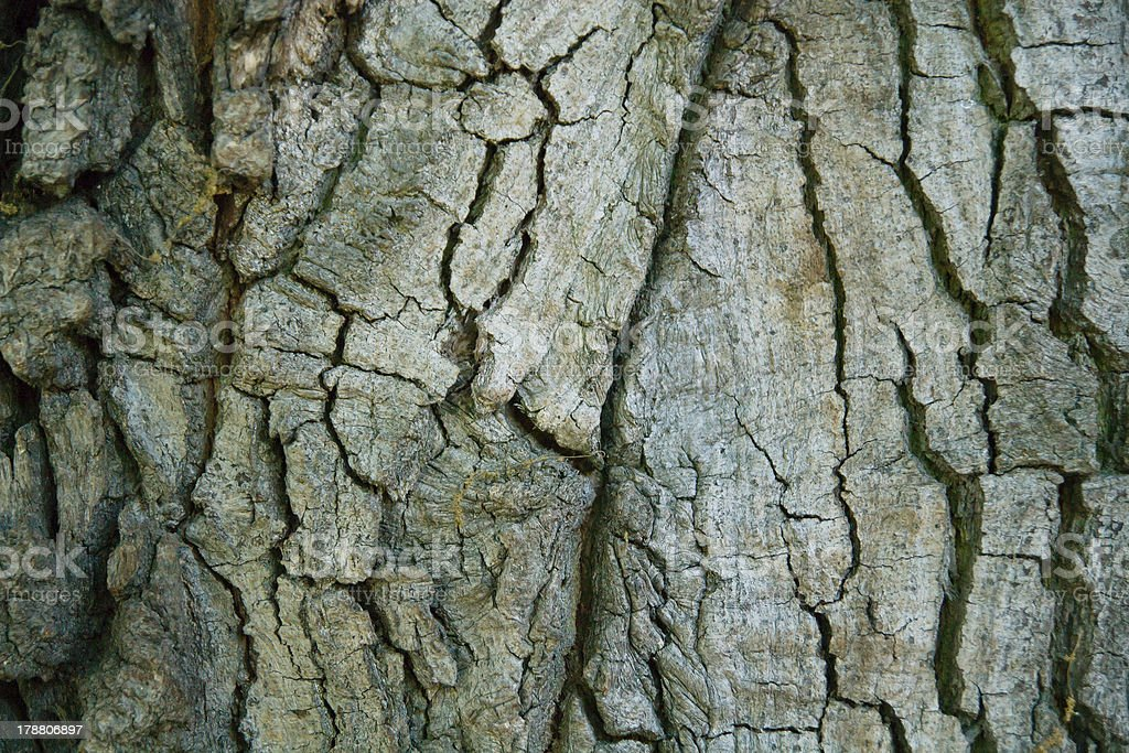 Wood tree texture background pattern stock photo